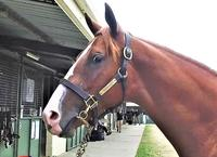 Lot 12 Star Witness ex. Pickabee_Moment.jpg