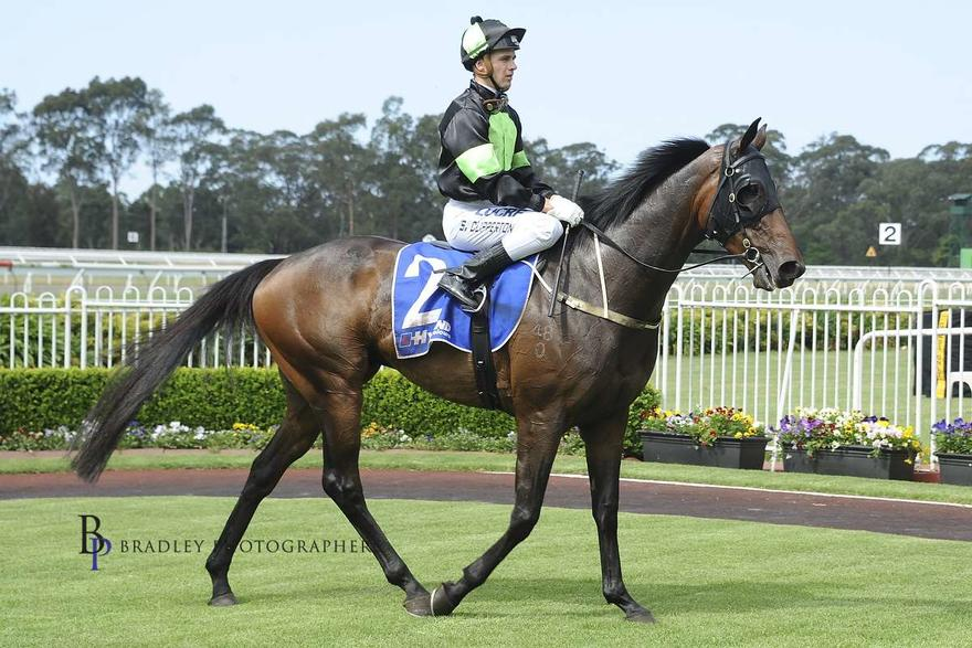Last Wish Warwick Farm.jpg