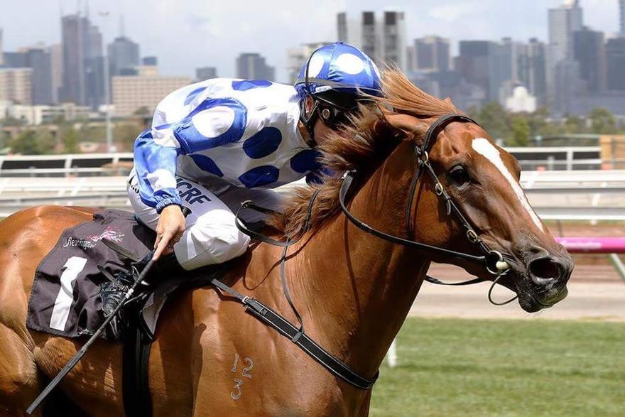 Miss Wonderland heads to Canterbury on her Magic Millions Path