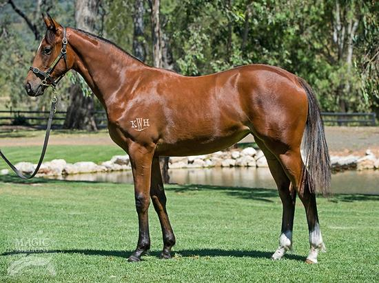I Am Invincible X Viennese Lass Filly