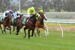 ATB's Tonza Rossa shows plenty of Zip to win at Stawell