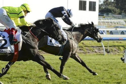 Second place in the 2013 Caulfield Cup is fine and Dandino for ATB owners
