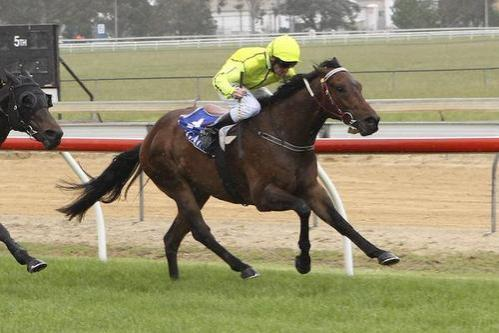 Host Me & General Amour to race at Ararat on Tuesday