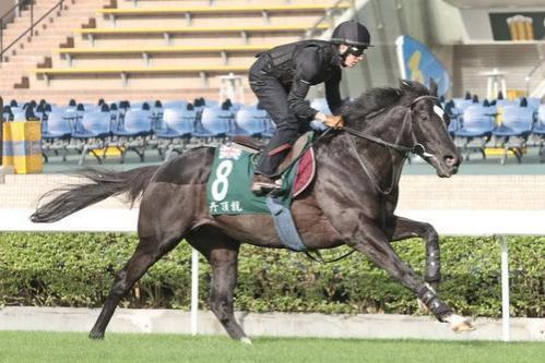 Damien Oliver expects Melbourne Cup form to hold up for Dandino in 2013 Hong Kong Vase