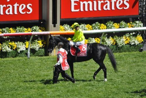 Dandino scratched from 2013 Hong Kong Vase with leg injury