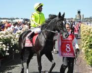 Join ATB to race top class staying horses worldwide or in Australia.