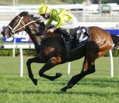 Rockolicious delivers for Australian Thoroughbred Bloodstock owners