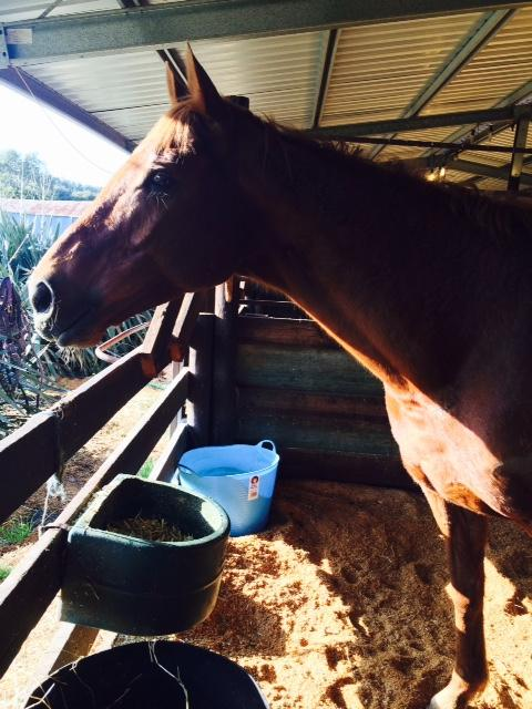 LuckyI'mbarefoot re-homed and ready for new career