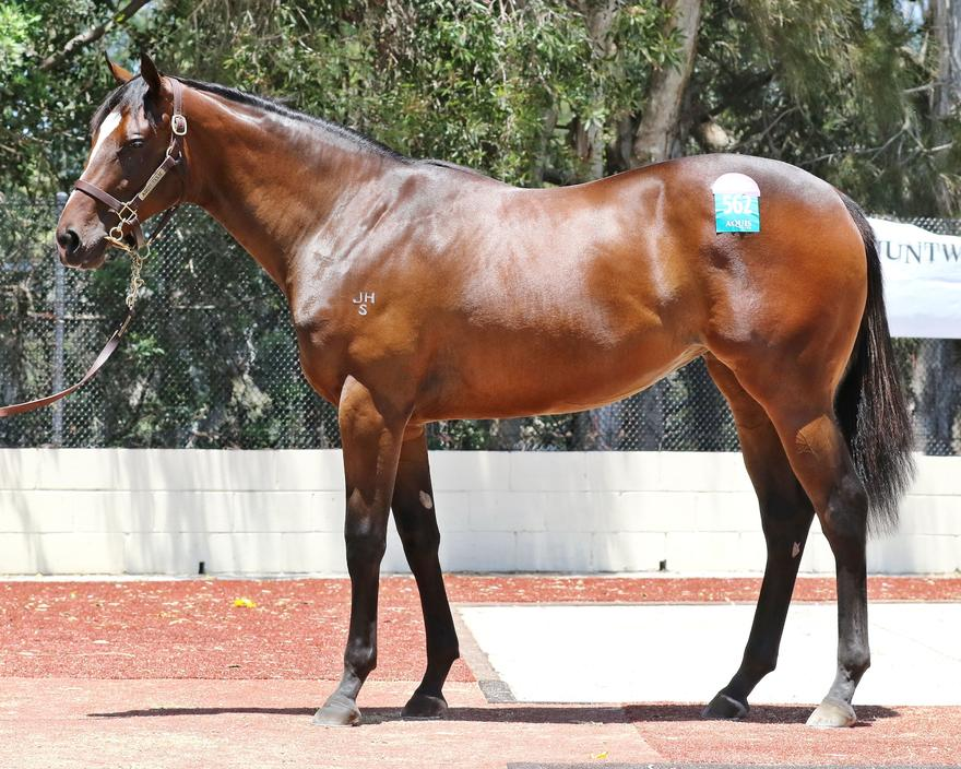 Australian Thoroughbred Bloodstock busy at the Yearling Sales