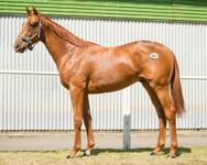 Bargain Buy Going To Master Trainer of Stayers