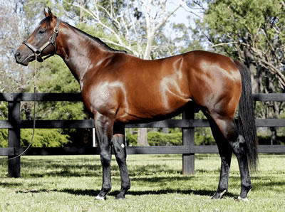 Oaks Goal for Foxwedge filly