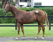 Star Witness filly showing great signs