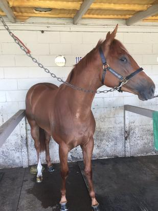 Australian Thoroughbred Bloodstock witness another She's Our Star win