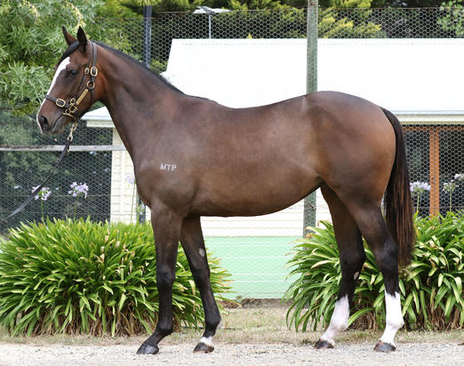 FRANKEL FILLY HEADS TO CIARON MAHER
