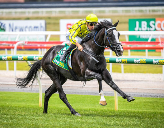 First Winner for Dandino and He Might Just Be A Derby Horse