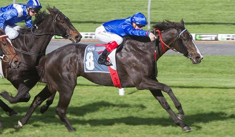Guineas win could be spring carnival launchpad for Antelucan