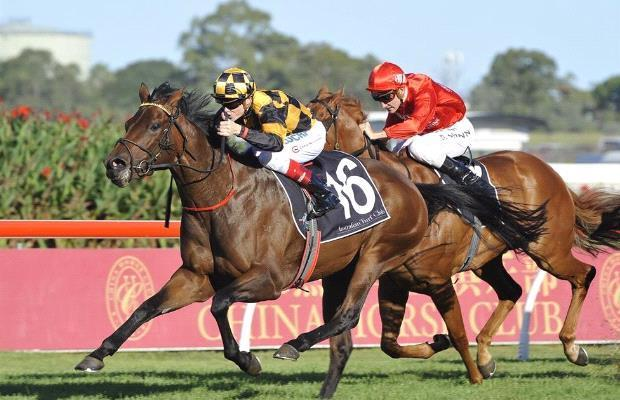 Morphettville Sangster Stakes Day - preview May7.jpg