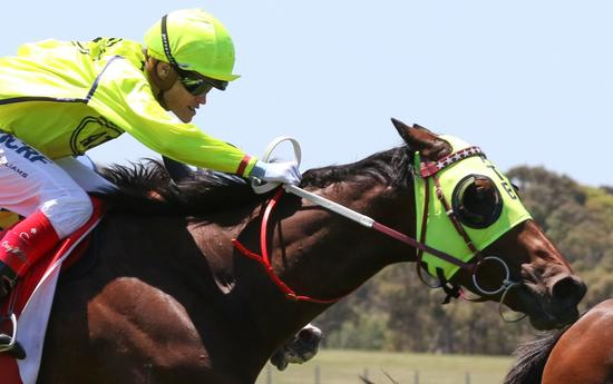 Yogi rounds up rivals in the Sandown Cup