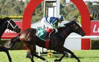 Excused delivered what Hayes expected in Wednesday's Yulong Handicap