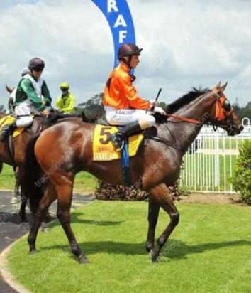 Shah San Gabriel Wins At Grafton