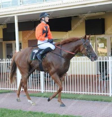 Voltaire Lumiere Breaks Track Record At Ipswich