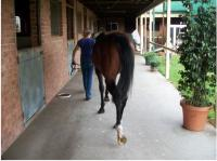 Walking around the stables