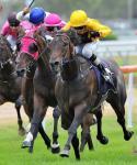 Profiler Sydney Championship Bound