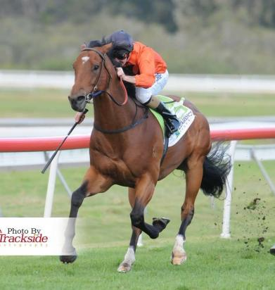 Hydrazine Triumphs In The Ballina Newmarket