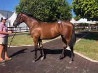 Magic Millions Yearlings New Additions to The Stable