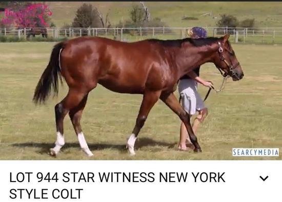 Star Witness X New York Style