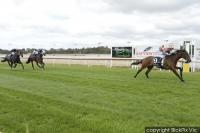 Familiar Colours fly home with a lot of new owners on board