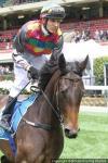 Seven winners In Jan from only 35 horses in work