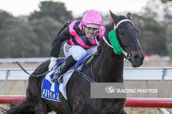 Traffic Cop another for the stable in the McPhee Silks