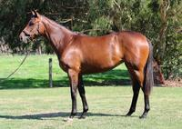 ****BE QUICK - SELLING FAST**** TOORAK TOFF FILLY