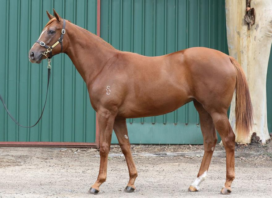 LADY BRIENNE FINAL LEASE SHARES