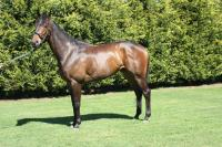 Stockdale has more success with broodmare's stock at Stawell