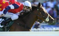FENWAY tunes up for Cox Plate trial