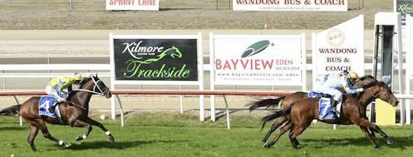Another wolf wins at Wodonga