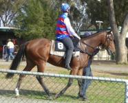 Tatura Trial May 16 2016 003.jpg