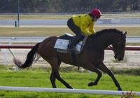 Kilmore Jumpouts Dec 13 2016 031.jpg