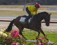 Kilmore Jumpouts Dec 13 2016 030.jpg