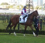 Flemington July 22 2017 095.jpg