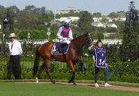 Flemington Dec 15 2018 240.jpg