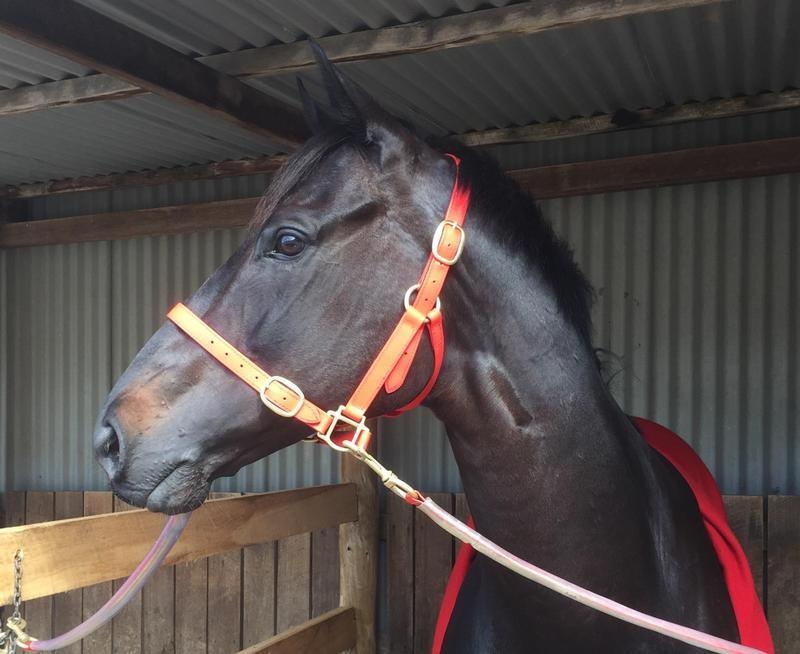 Hollywood Gothic makes it a treble for Trinder Racing