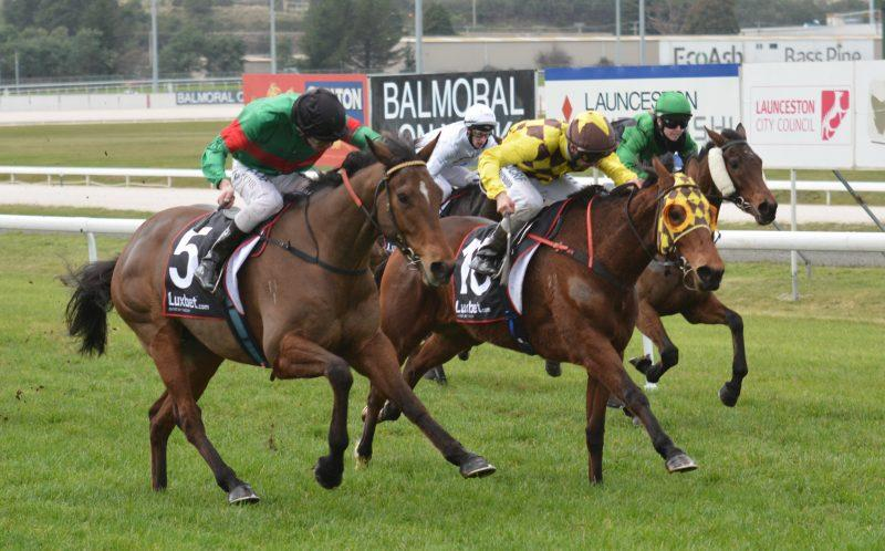 Storm Gust finds niche on heavy track
