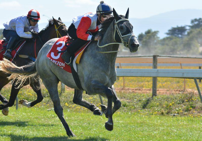 Silver Bolt warms up for Cup Day sprint