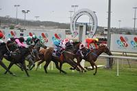 Kathonious wins on Launceston Cup day