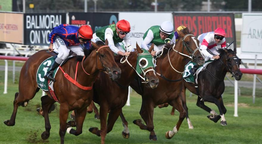 Twitchy Frank wins Vamos Stakes