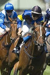 Playwright - 2008 C S Hayes Stakes GR3.jpg