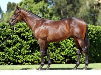 Melbourne Premier Yearling Purchases: All in the Family